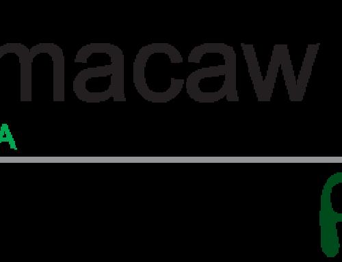 Blue Macaw Flora: a empresa por trás de Frootiva